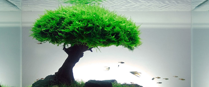 Aquarium Plants List