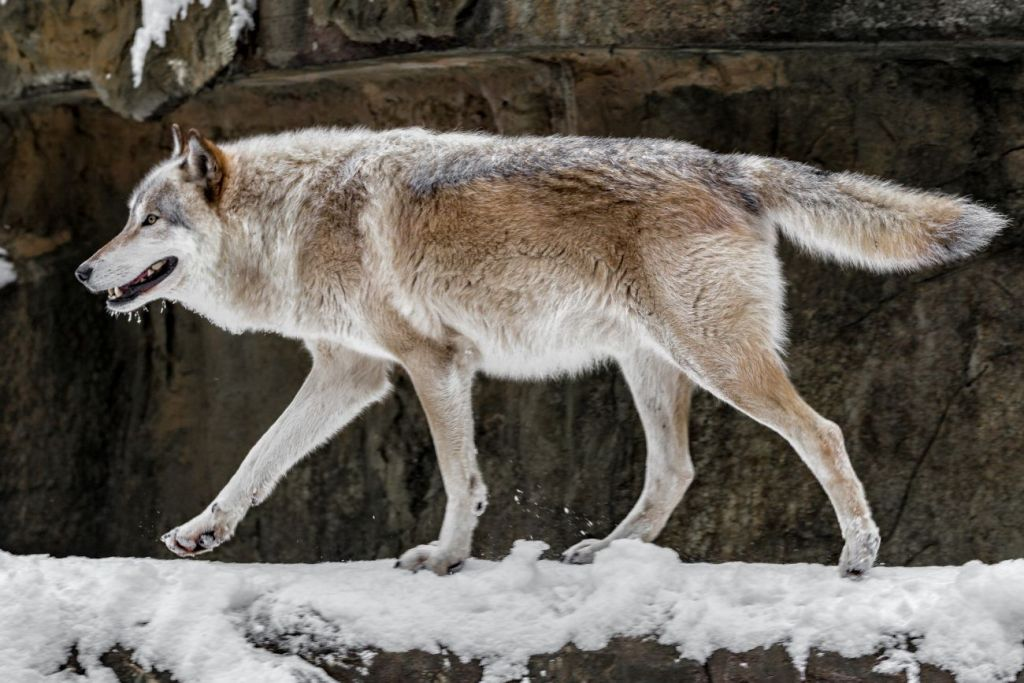 Taming the Lone Wolf: 4 Ways for Sales Leaders to Promote a Pack Mentality