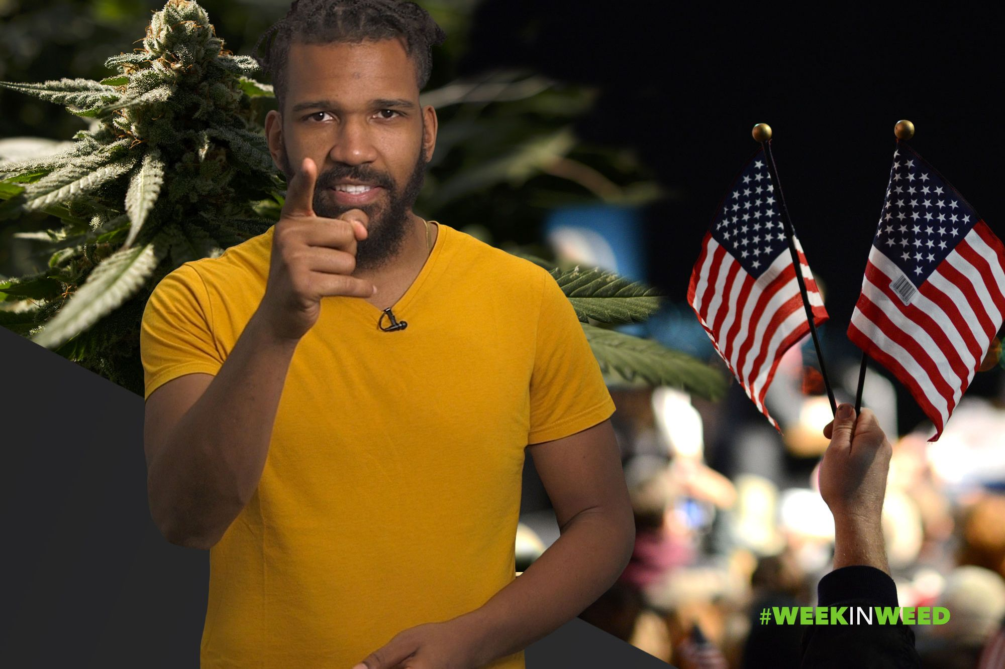 This Week in Weed: les Américains votent contre le cannabis!