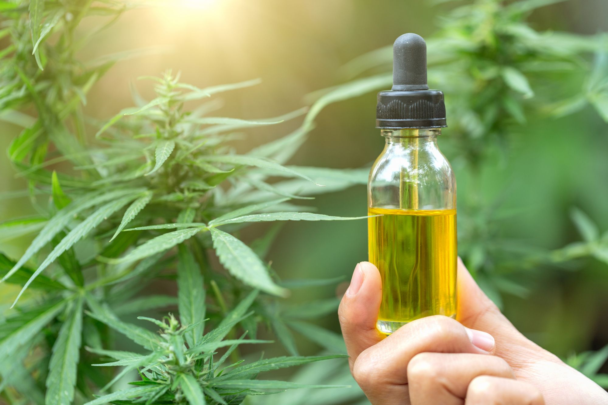 5 Essential Cannabis Trends You Can't Afford to Miss