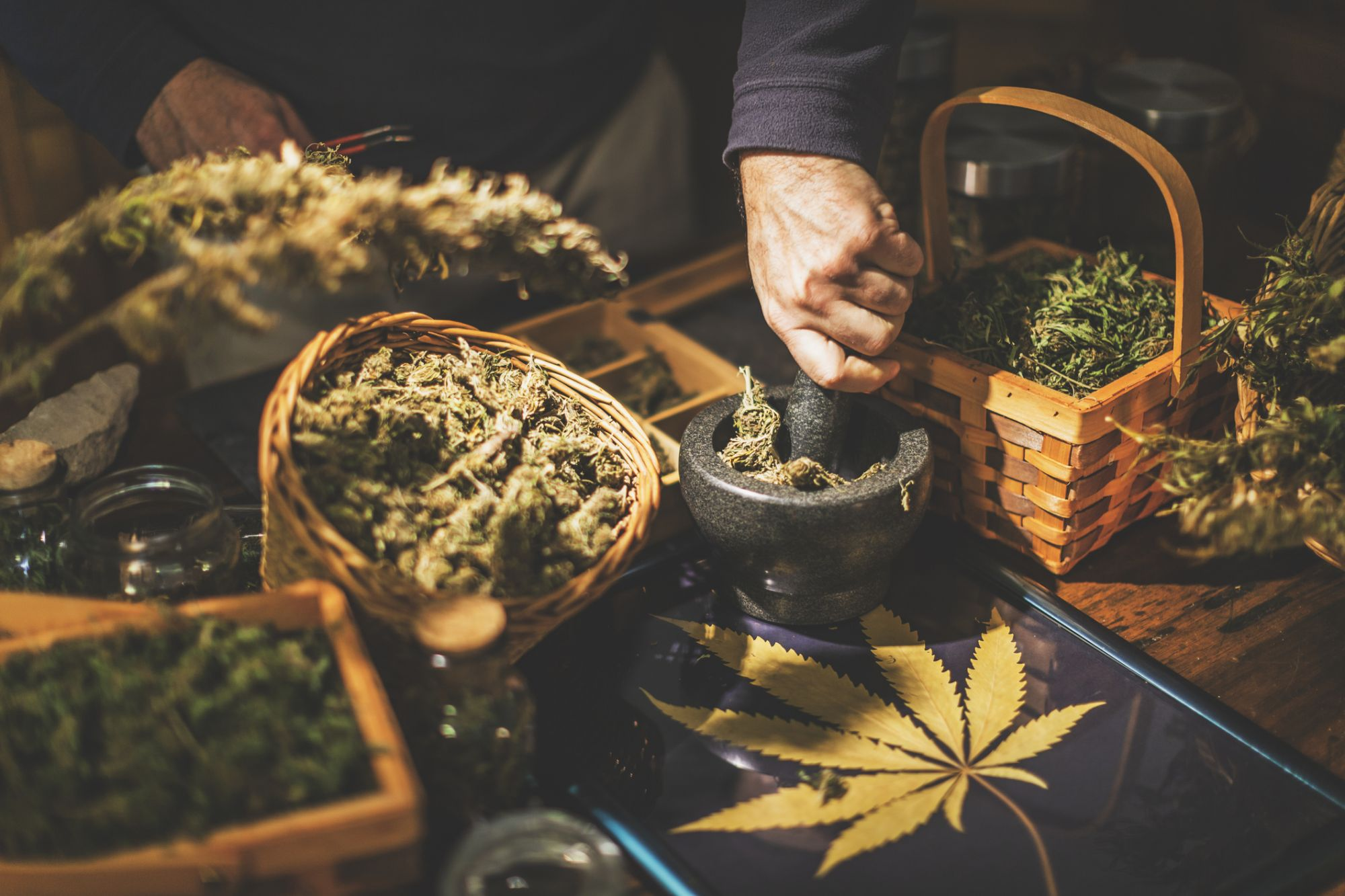 5 Things You Should Know Before Starting Up Your Cannabusiness