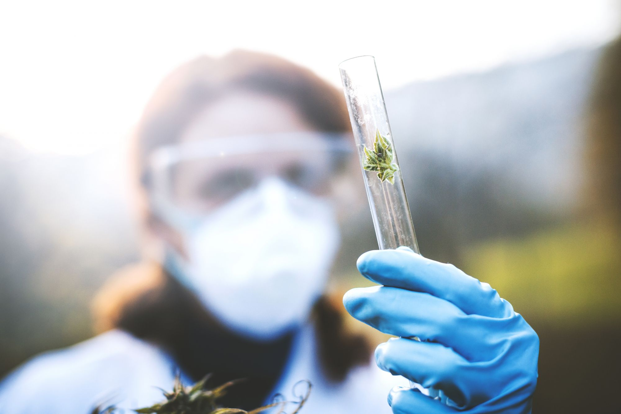 "Federal-Licensed Researcher Sues Government Over ""Sub-Par"" Research Cannabis"