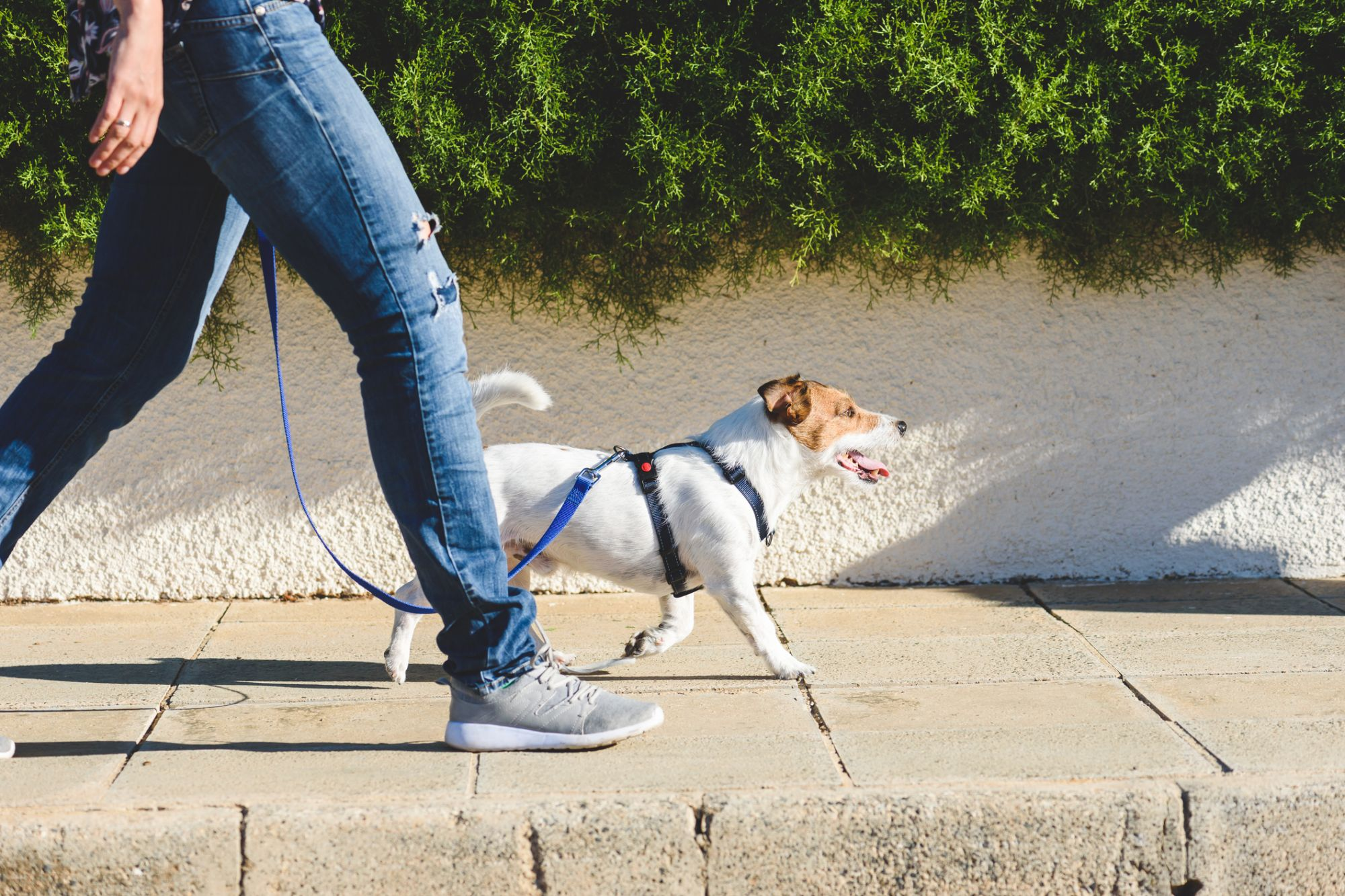 3 Ways Technology Has Changed the Pet-Care Industry
