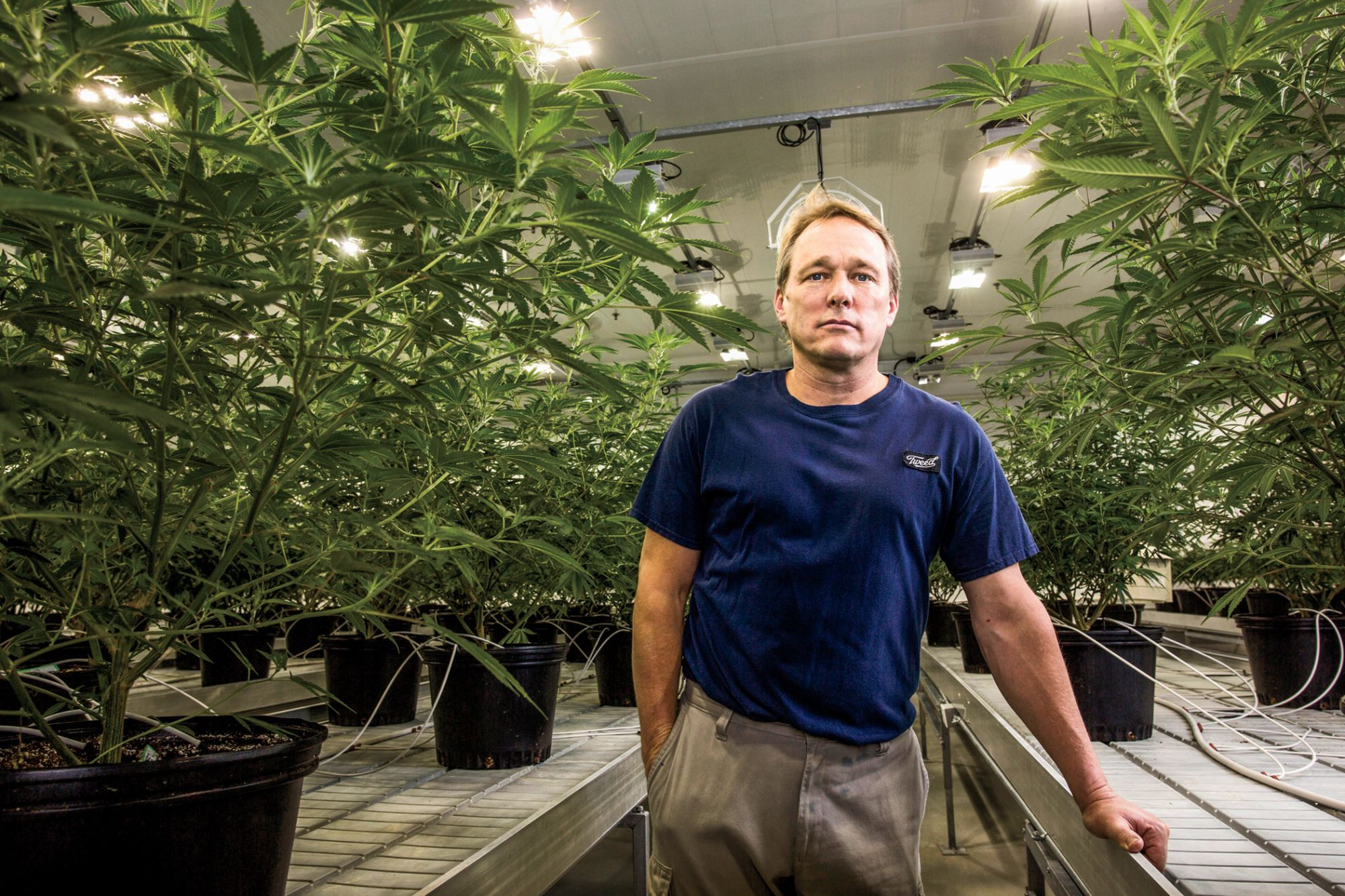 Bruce Linton Bets On The Next Big Things In Cannabis