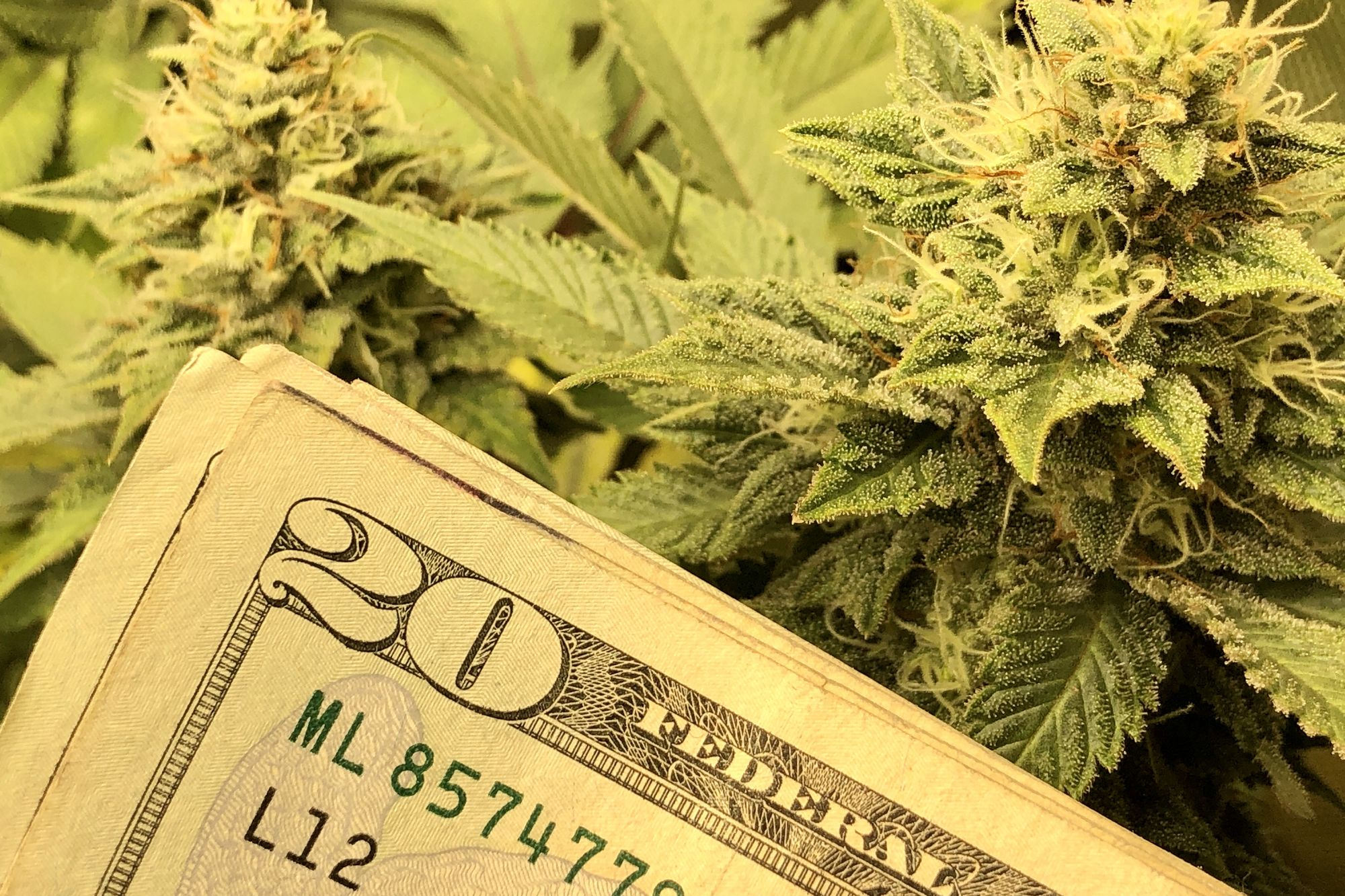 Why Traditional Venture Capitalists Don't Invest in Cannabis Companies – and Who Will