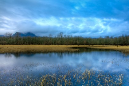 Wetlands At The Columbia River Gorge
