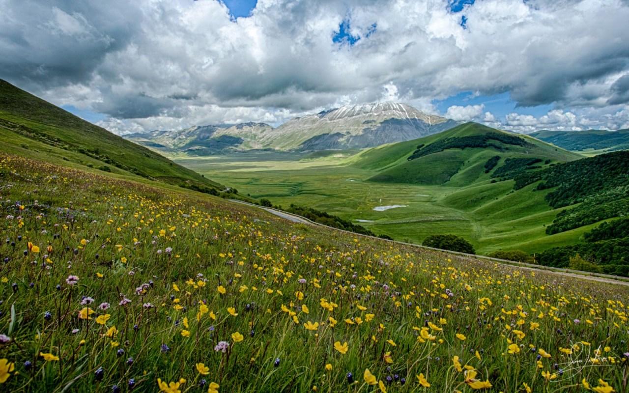 Wildflowers In Umbria