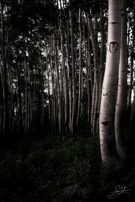 Dreamy Aspen Grove