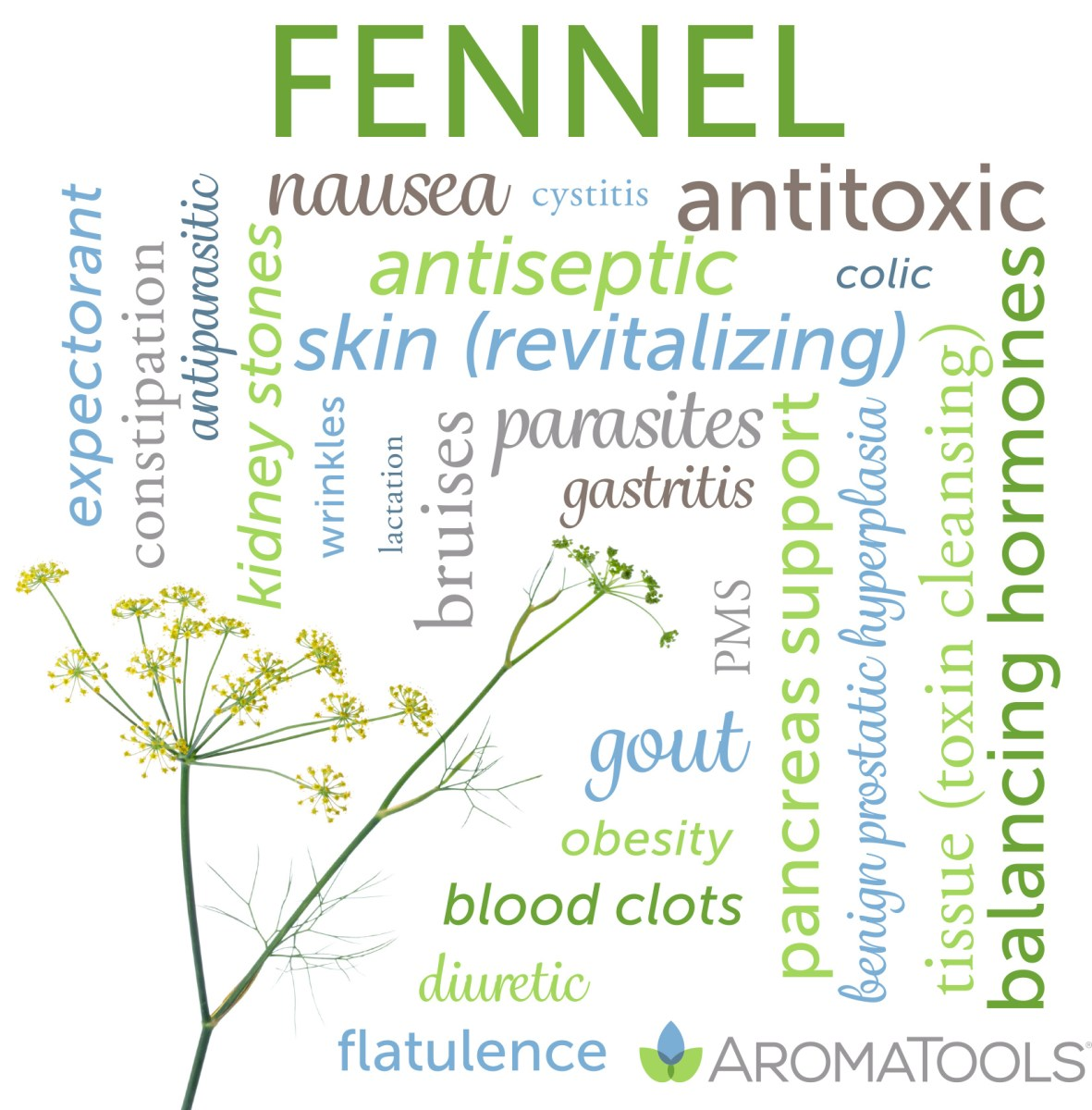 Essential Oil Spotlight: Fennel