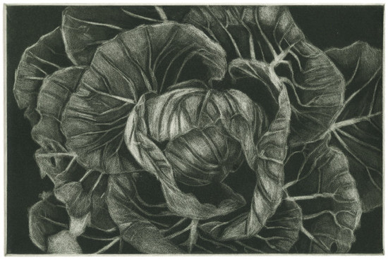 Cabbage by Barbara Stikker. Though not a true mezzotint (it's actually an aquatint), this etching was created using similar subtractive techniques.