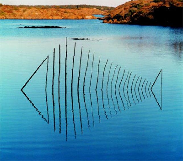 Wolfgang Buntrock, Fish 2