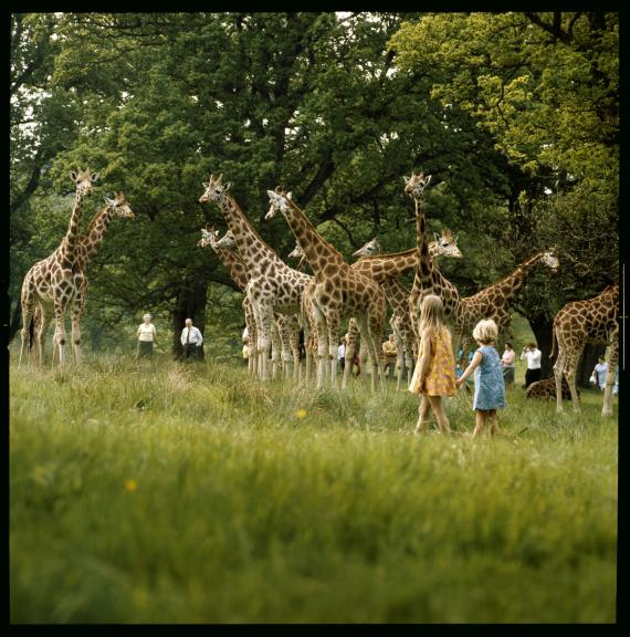 eat7_East_Africa_Picnic_Game_Park__Longleat__Warminster__Wiltshire_510d352e9ab1c
