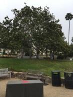 The Beautiful Magnolia Garden - Westmont College