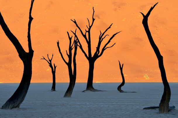 Deadvlei - Namib Desert, Namibia - 12 Breathtaking Places to Spend Your Birthday Vacation