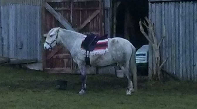 Pegasus und der Sattel