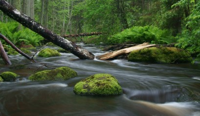 three ways to connect with nature, picture of a stream and trees