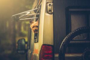 tips-for-rving-bring-dog