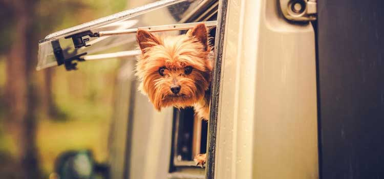 go rving with your dog, picture of a dog poking his head out of the side of a rv