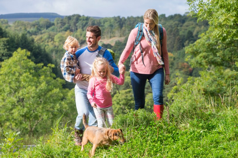 Family of four hiking with their dog. They are walking up a grassy hill on a nice summers day. Camping with dogs concept