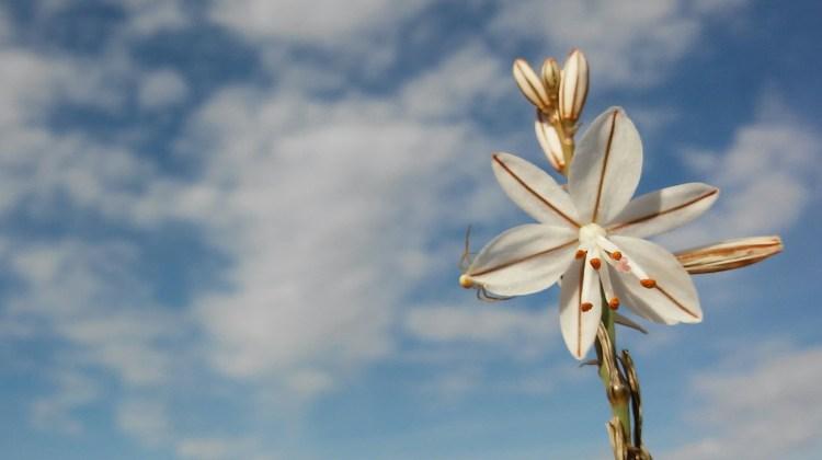 Excursión Minica de los Colores y Casica de el Guardia...flor a flor