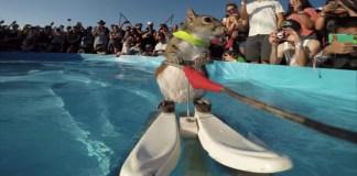 écureuil ski nautique