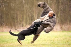man vs dog - Activité insolite à Budapest