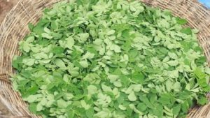 Fresh Organic Moringa Leaves
