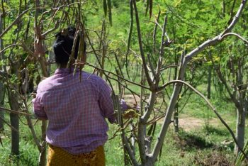 Moringa-Land-Baca-Villa-05-2015-16