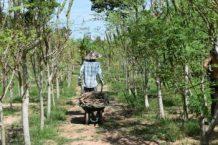 Moringa-Land-Baca-Villa-05-2015-18