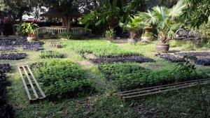 Moringa Nursery Baca Villa