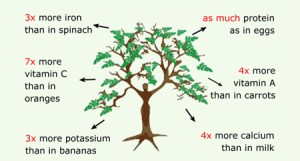 Moringa highest absorption carbon dioxide emission.