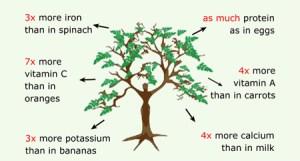 Moringa highest absorption carbon dioxide emission.