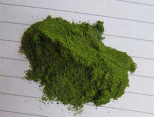 organic-powder-moringa-finest-pure-quality