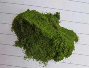 organic-powder-moringa-finest-pure-quality