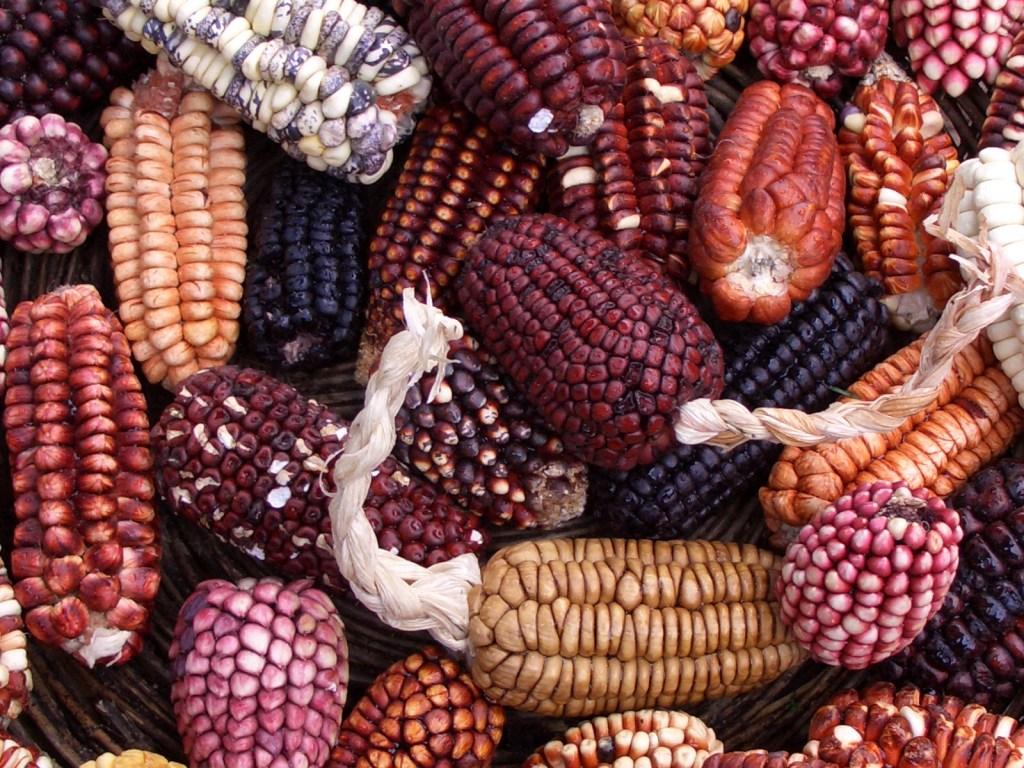 Peruvian_corn