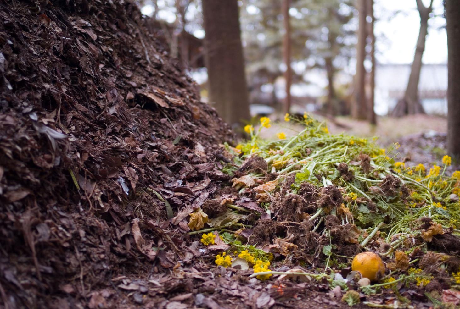 garden brown green compost nature soil