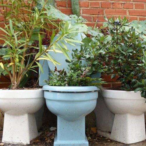 toilet bowl planter gardening creative diy
