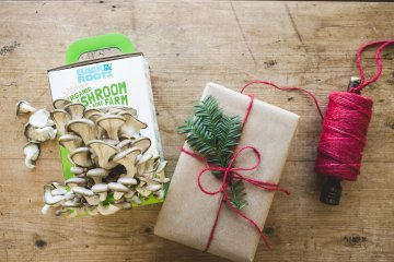 back to the roots mushroom farm kit mushroom growing kit grow your own organic mushrooms