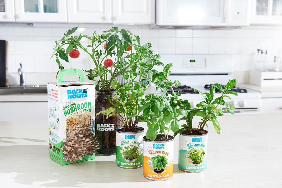 Complete Windowsill Garden Kit