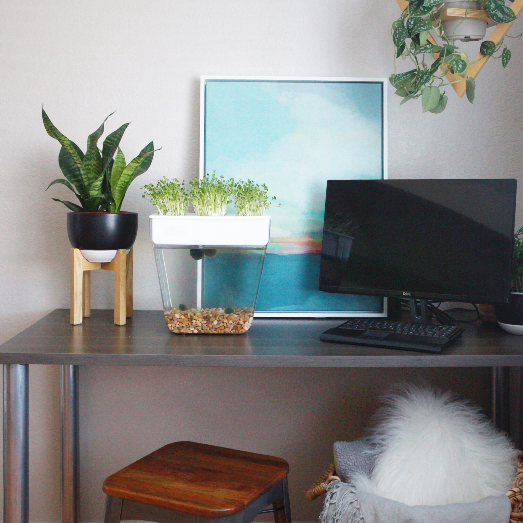 5 Health Benefits Of Growing Indoor Plants Back To The Roots Blog