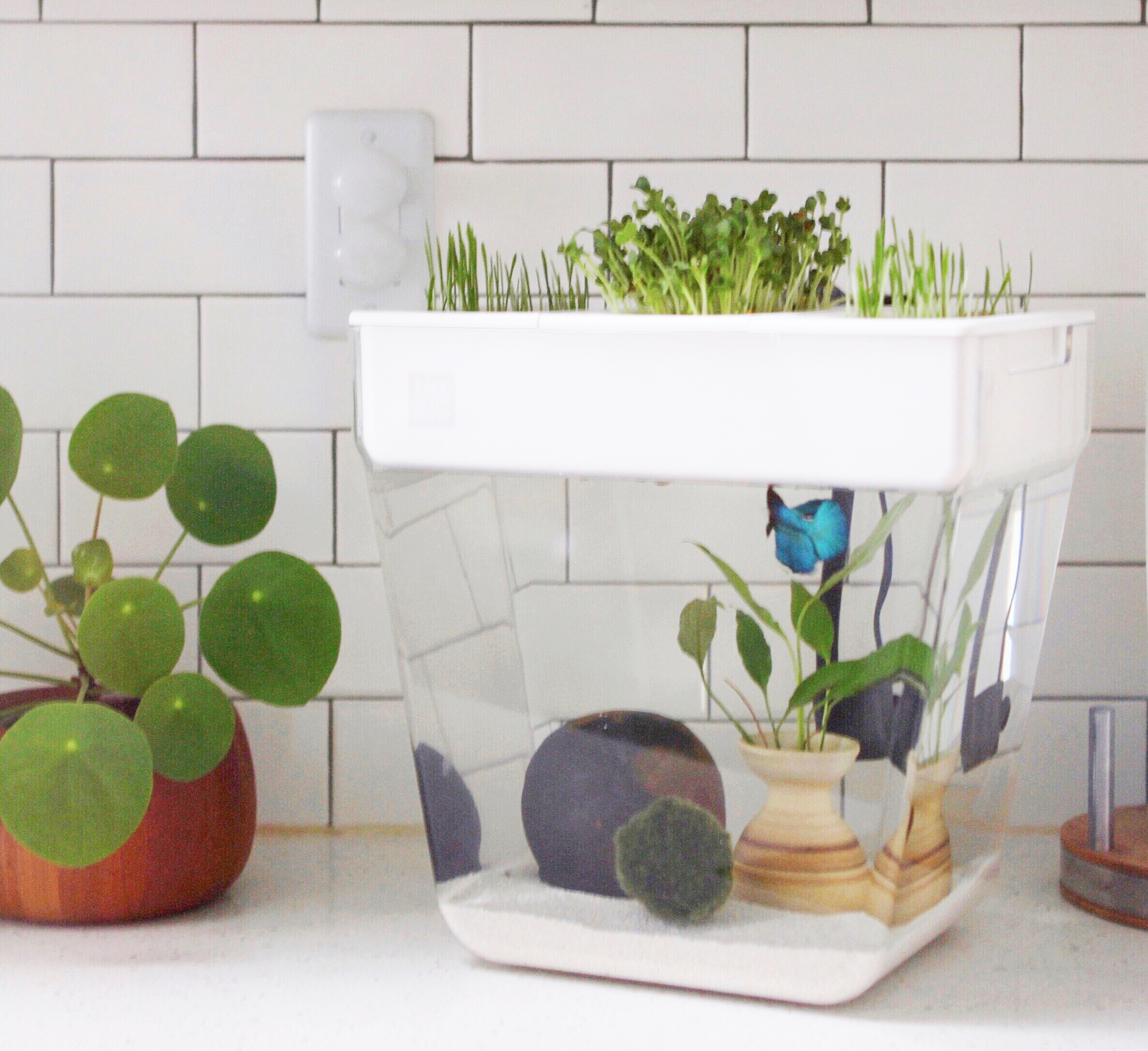 7 Things I Wish I Knew Before Adopting A Betta Fish Back To The Roots Blog