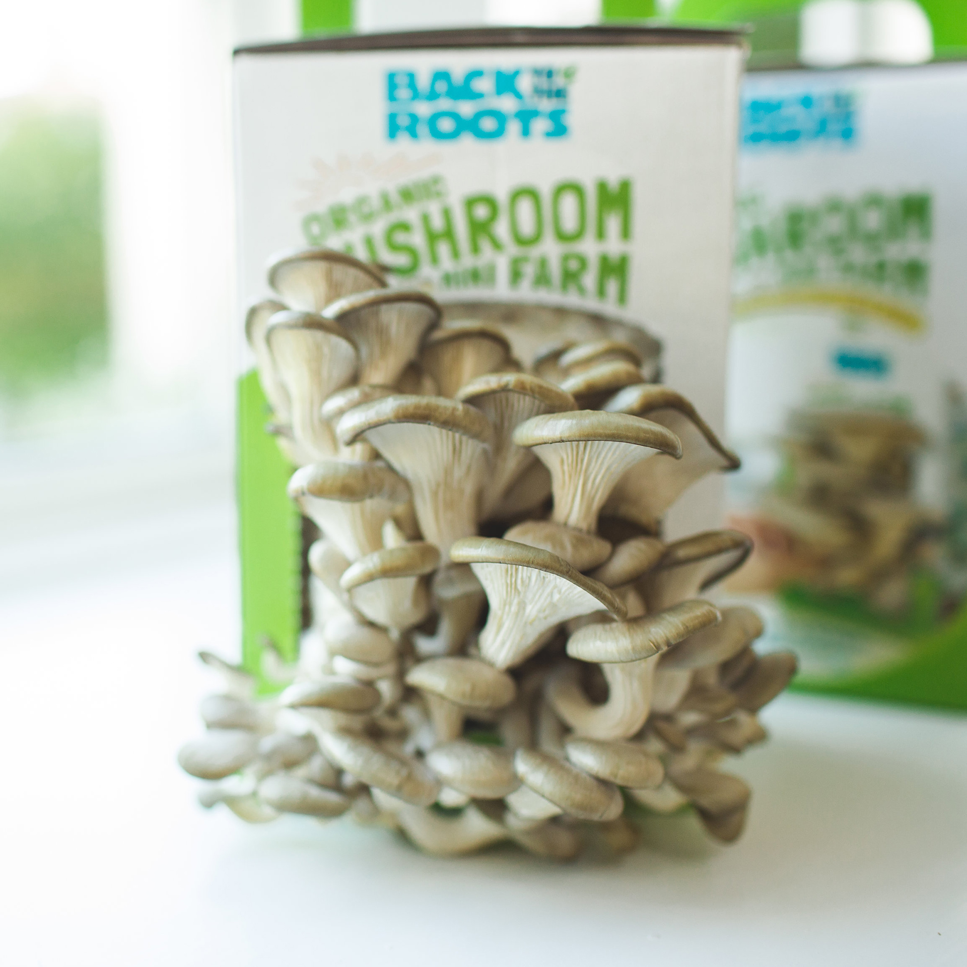 How to Grow Your Own Organic Mushrooms – A Mushroom Growing Guide