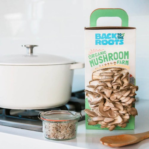Back to the Roots mushroom growing kit