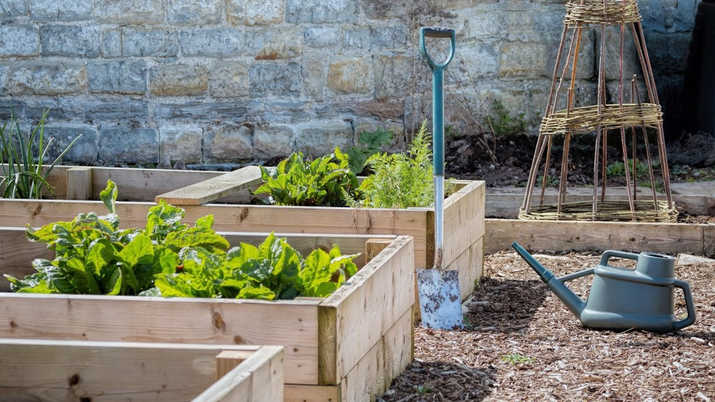 Raised vegetable garden: Vegetables in raised garden beds with spade and watering can