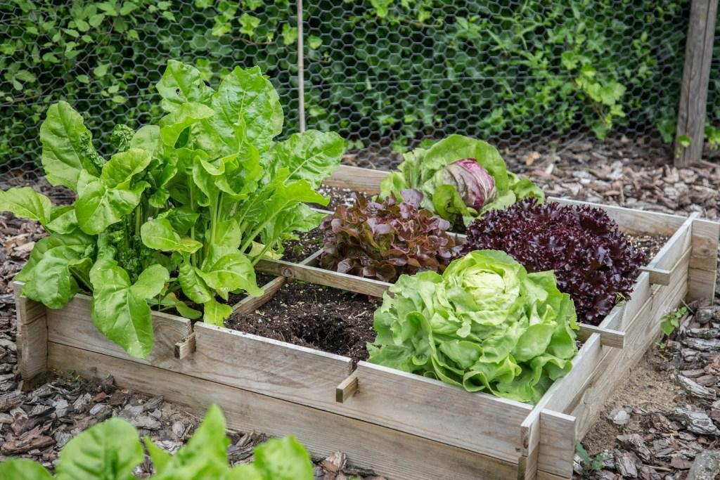 howto set up raised vegetable garden