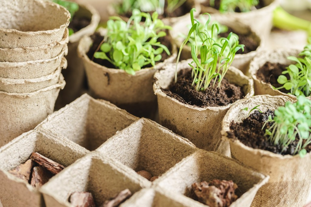Seed starting tray and small pots with seedlings