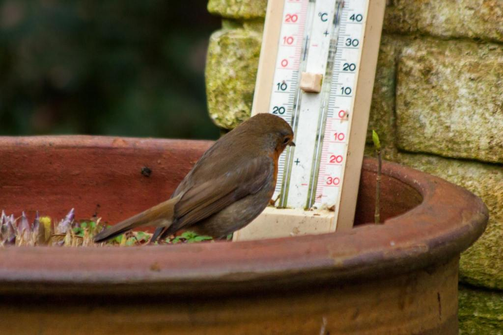 Bird looking at thermometer in a garden pot