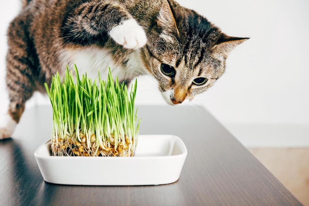 cat grass: Cat about to touch grass on a table
