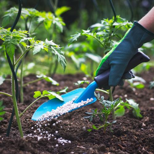 organic fertilizer: garden shovel with seeds