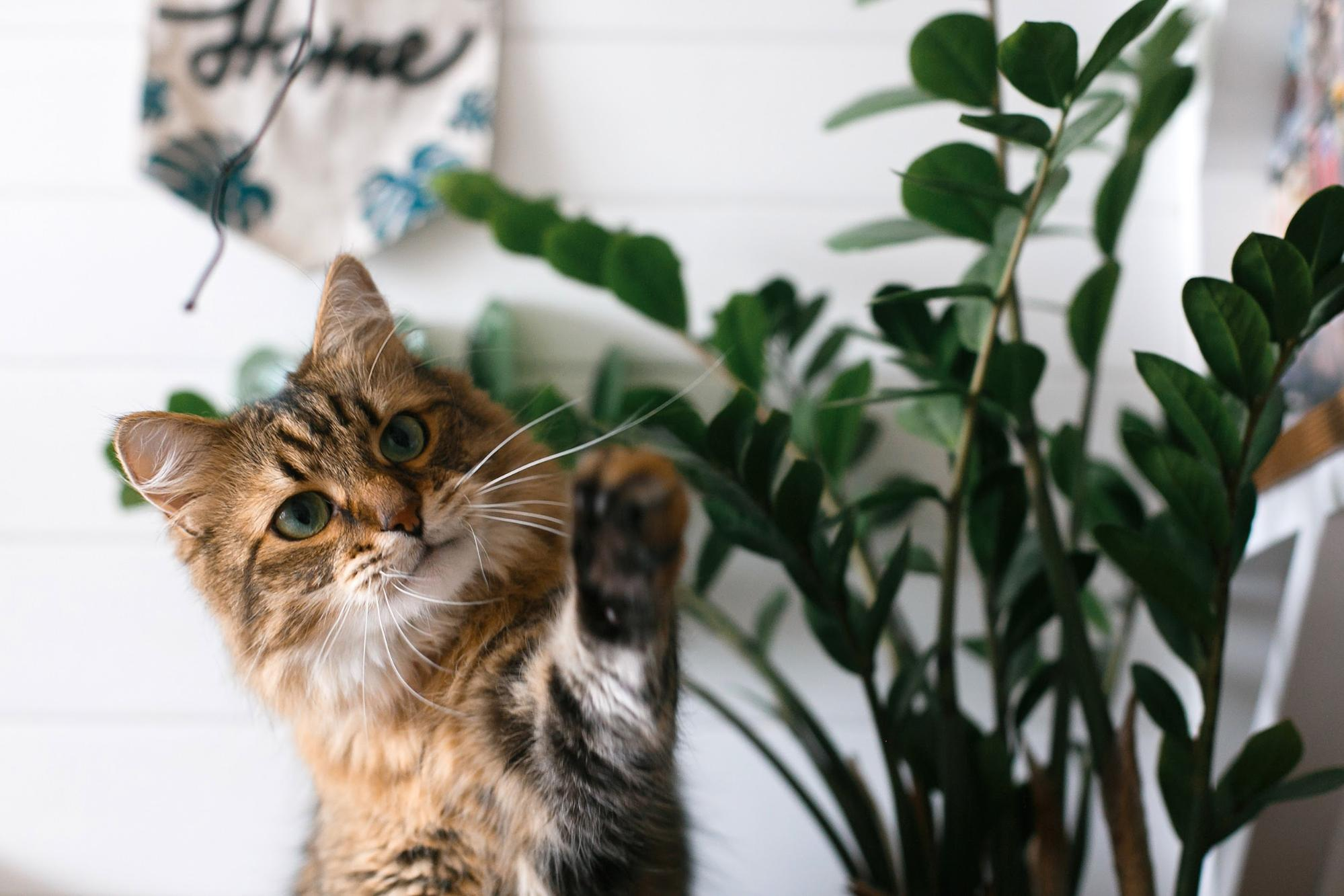 plants safe for cats: Cute cat playing with a plant